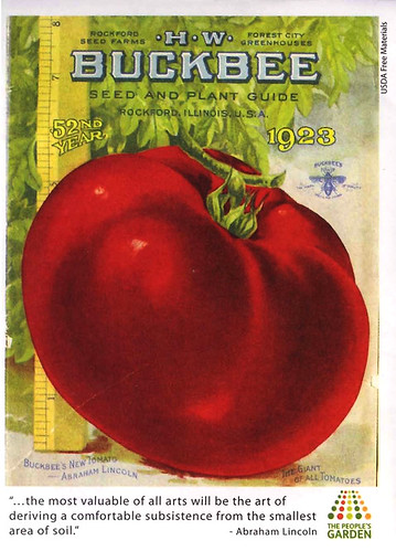 Tomato seeds of the 'Abraham Lincoln' heirloom variety were used by the PMC to germinate plants given away at the event.