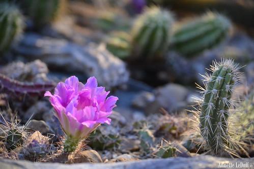Yin & Yang of Cacti