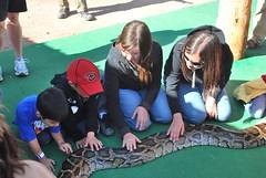 Python Petting