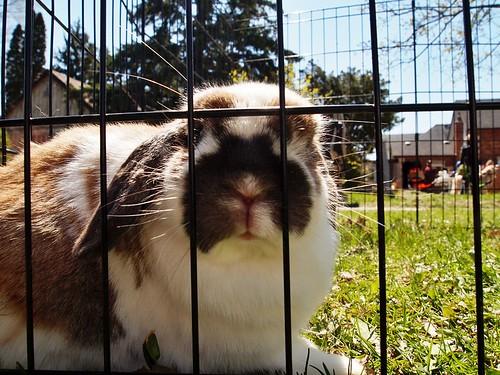 bunny face - hello!