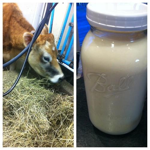 unprocessed milk