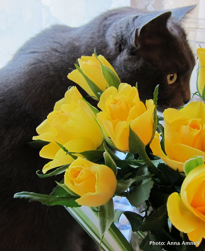 A cat and roses