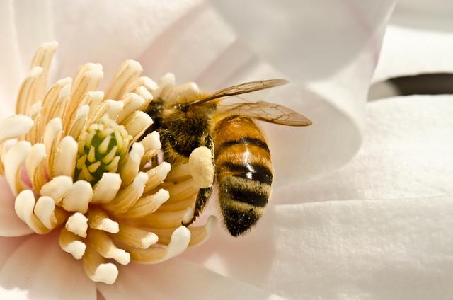 Spring Has Sprung - I Will Bury My Head in Pollen