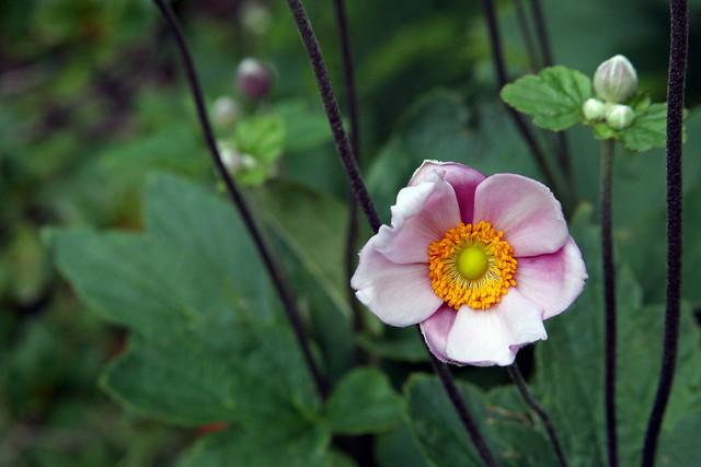 Flor 14