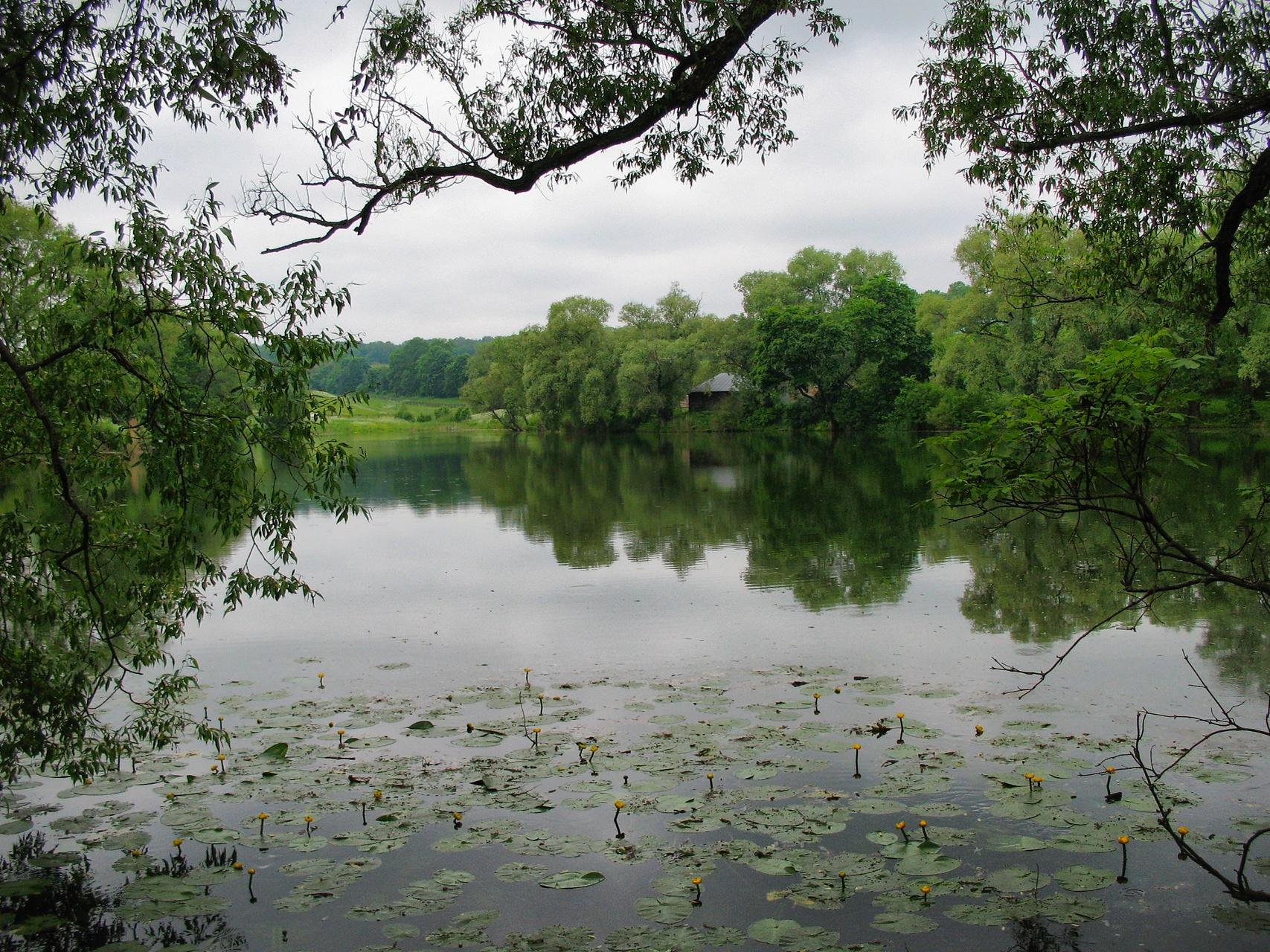 A Large Pond In Yasnaya Polyana A Large Pond In Yasnaya