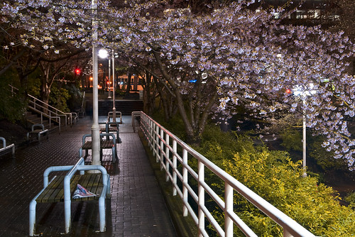 Cherry Blossomy by petetaylor