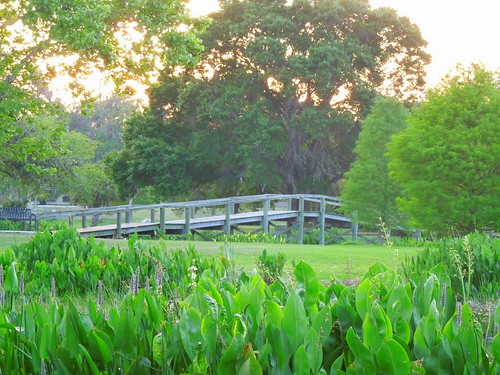 bridge sunset nature florida