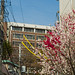 Small photo of Keio University