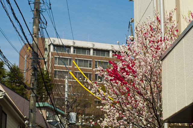 Header of Keio University