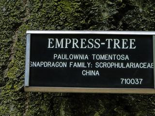 6-77-21apr12_3695_Botanical_garden_empress_tree