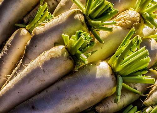 Daikon in the sun by joeeisner