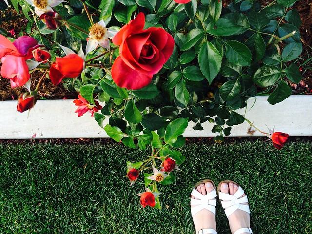 Photo of the week: Rosegarden