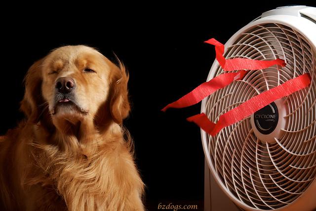 Henry's Fan