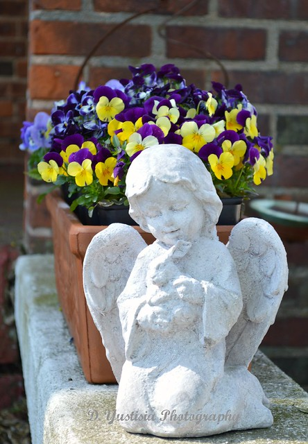 Angel & Pansies