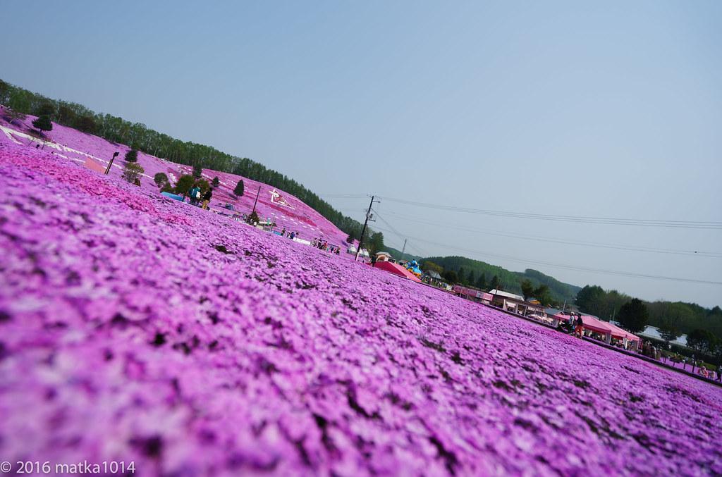 東藻琴芝桜公園-2
