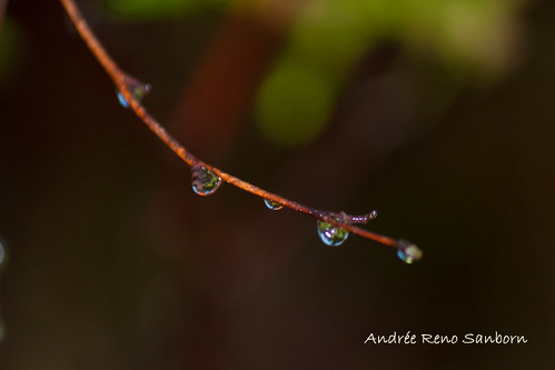 Wet-16.jpg