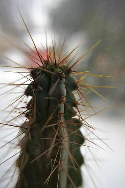 anteketborka_cactus9
