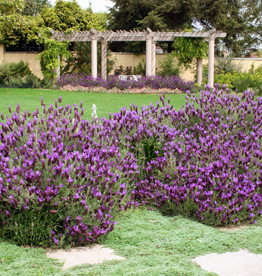 Lavendar and thyme punctuate the sunny windswept areas.