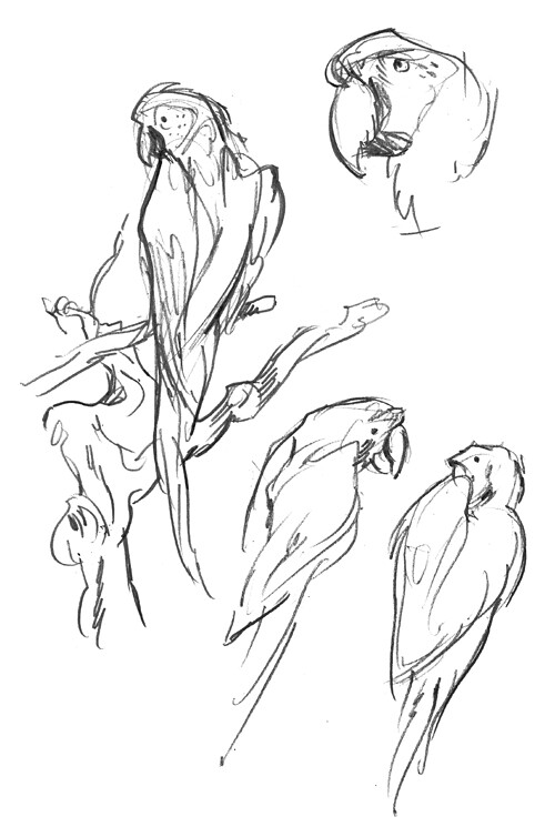 Sketchbook parrots