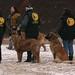 Pferdemarkt Leonberg, Leonberger Hunde, Parade im Schnee , 38-52/5549 by roba66