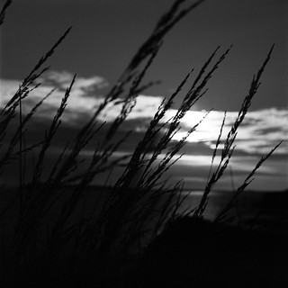 Black grass sunset