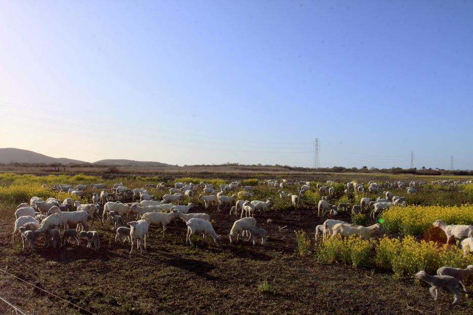 022712_03_sheep01