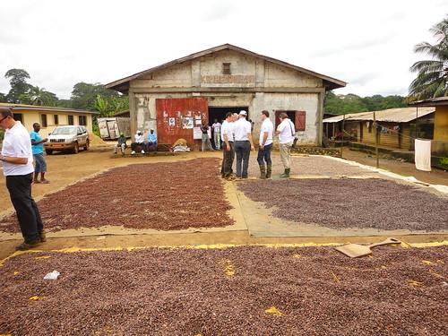 Séchage du cacao - Coopérative Konafcoop, Cameroun (2011)