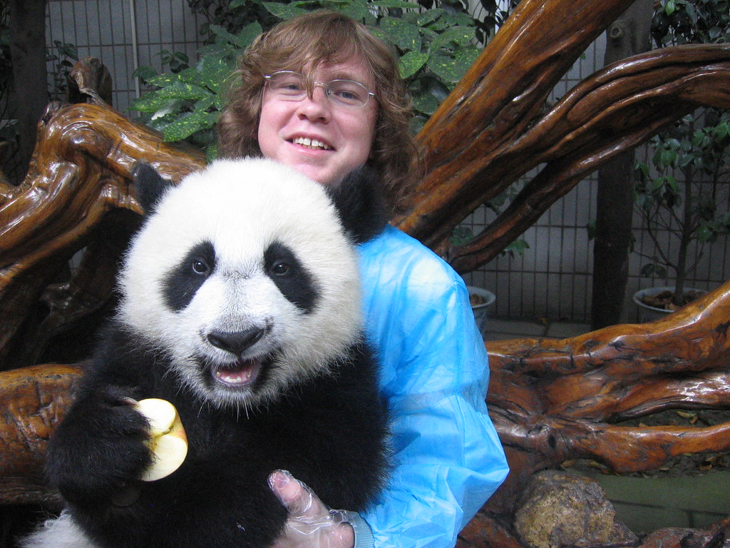 Pacific Lutheran University Wind Ensemble member Joe Boertmann with a panda cub at the Chengdu Panda Breeding and Research Center