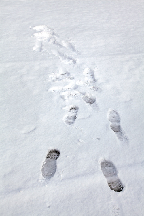 footprints in the snow, Kasaan, Alaska