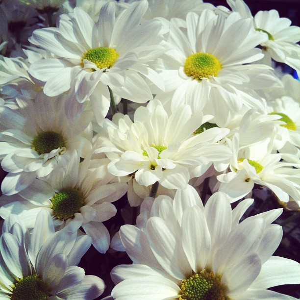 wedding flowers with daisies