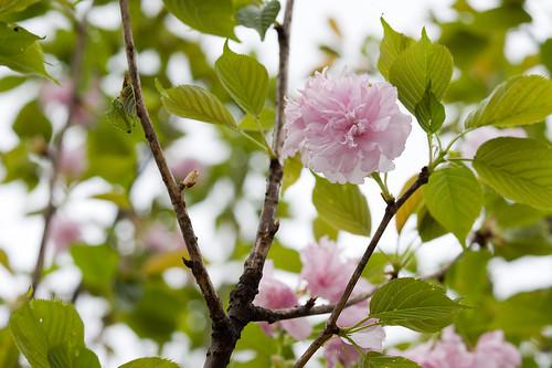 看起來蠻美, 但我還不知道這朵花的名字