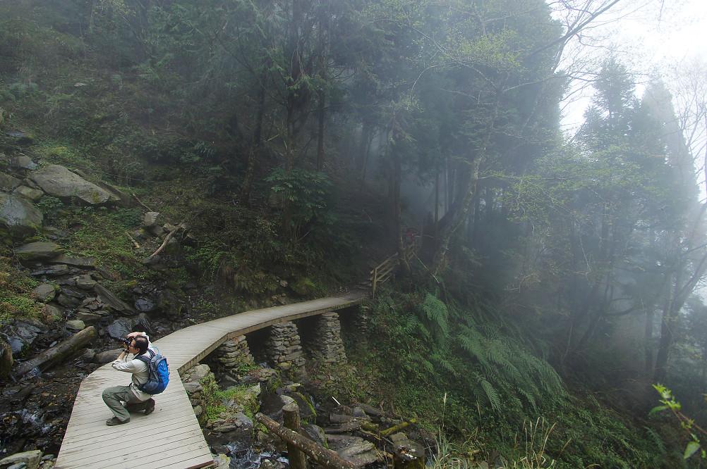 觀霧巨木步道-032