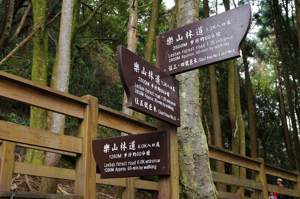 觀霧巨木步道-059