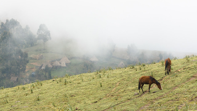 Grazing in the Clouds, Simien Mountains National Park, 2007