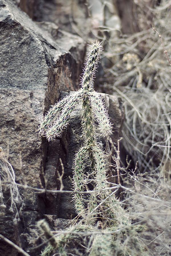 Cactus Guy