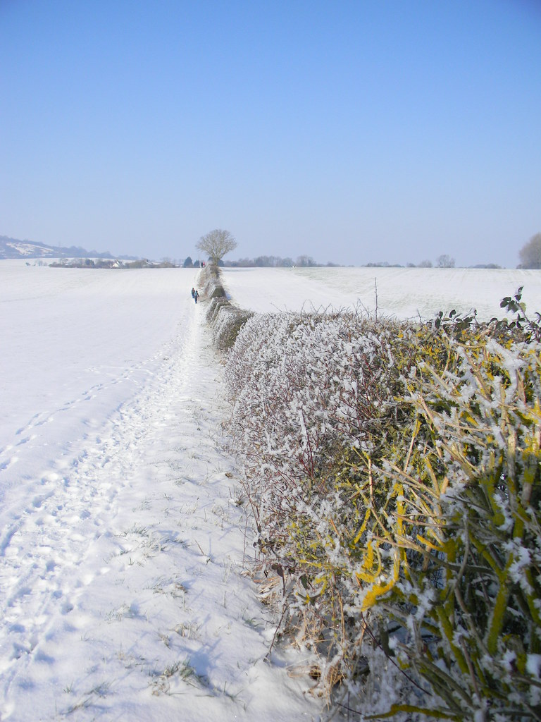 Hedgerow in snow Saunderton to Bledlow