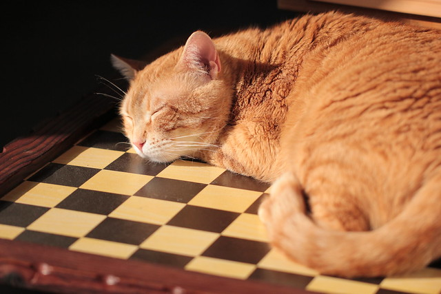 sunbathing on the chess board