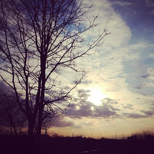 散歩 木 太陽