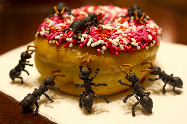 donut ants 2