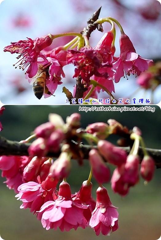 16 蜜蜂
