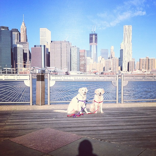 Daily East River Dogs 19 February 2012