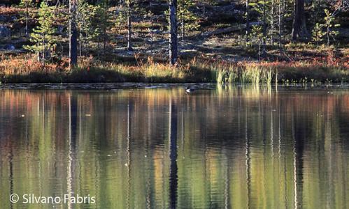 reflection landscape wildlife paesaggio