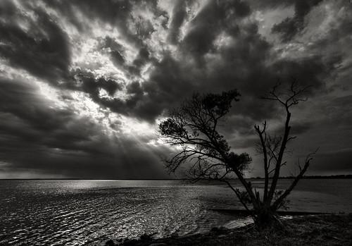sunset blackandwhite bw usa cloud tree silhouette tramonto nuvola northcarolina albero biancoenero photographia massimostrazzeri lakemattamuskeet mattamuskeetnationalwildliferefuge ziomamo gettyfeb2012priv