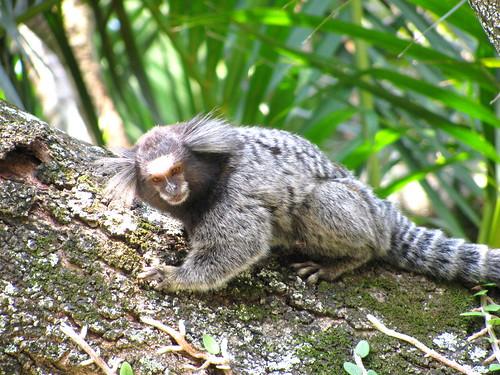 Macaco by Miradas Compartidas