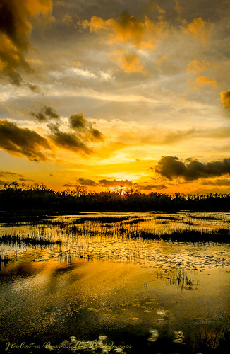 Sunset on the Grassy Water Preserve-9525 by Against The Wind Images