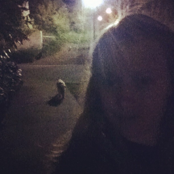 Vera + I on our #night walk #softcoatedwheatenterrier #febphotoaday #day26