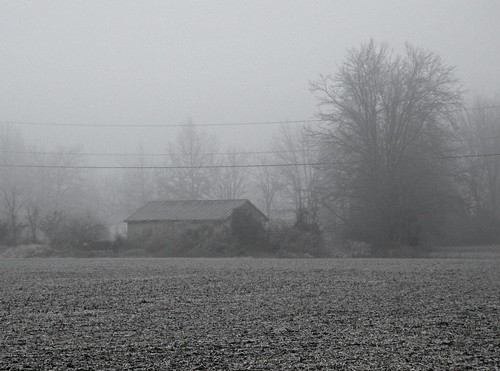 morning blackandwhite fog