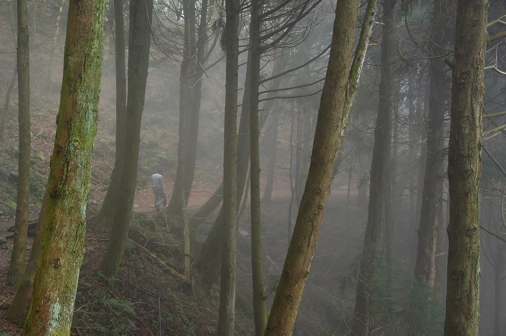 觀霧巨木步道-029