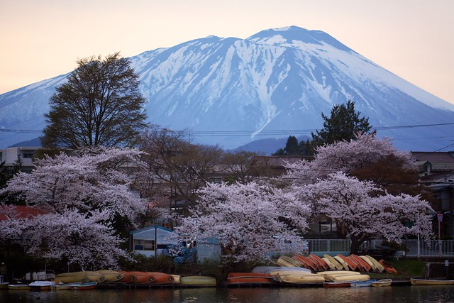 Boats, Blossoms and Blue
