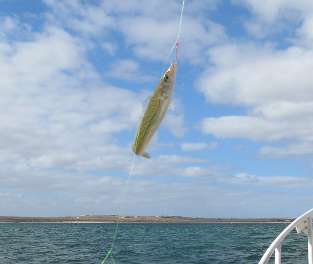 Streaky Bay fishing trip